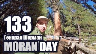 Moran Day 133 - Генерал Шерман
