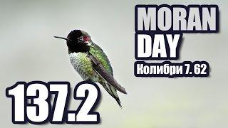 Moran Day 137.2 - Колибри 7,62