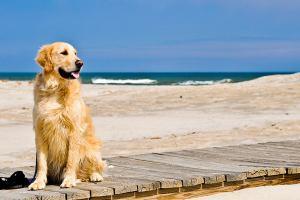 Испания: Собака - тоже человек