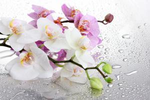 Китай: В Сучжоу начинается выставка орхидей