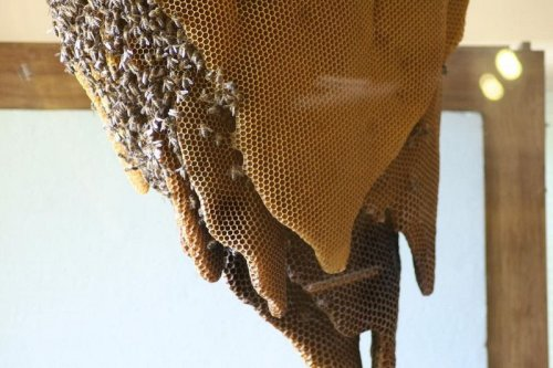 Музей пчел в Испании