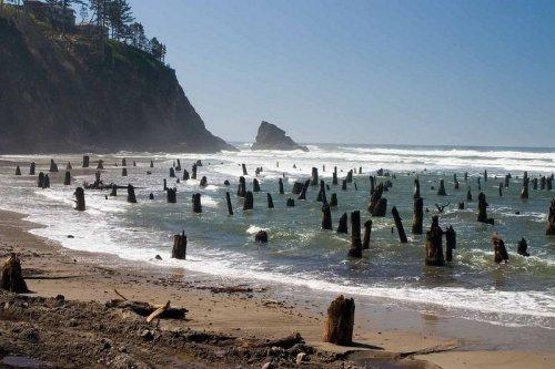 Призрачный лес на тихоокеанском пляже